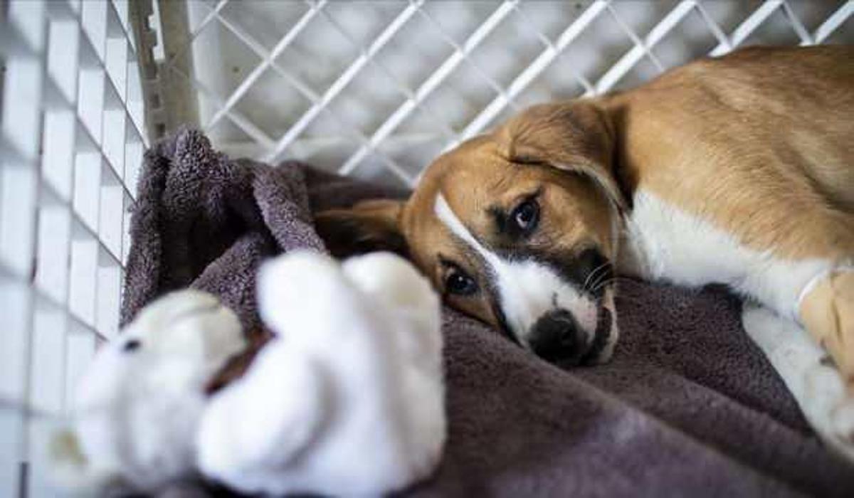 Hayvanları Koruma Kanunu teklifi TBMM'den geçti - GÜNCEL Haberleri