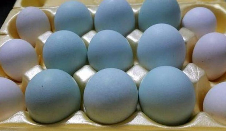 Herkes mavi yumurtayı konuşuyor!