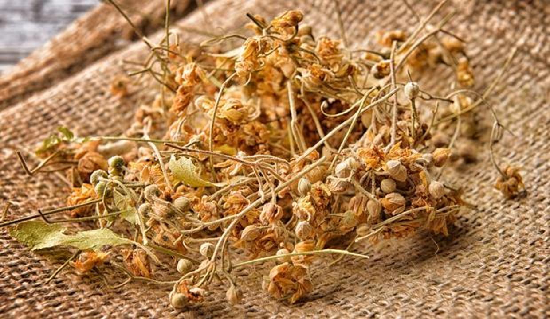 Ihlamurun bilinmeyen faydaları: Ihlamur çayı hangi hastalıklara iyi gelir?