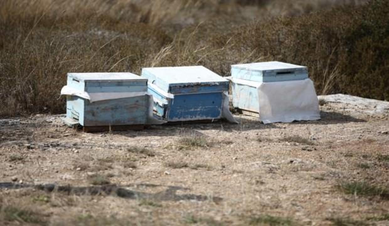 Çalmak istediği arı kovanları sonu oldu