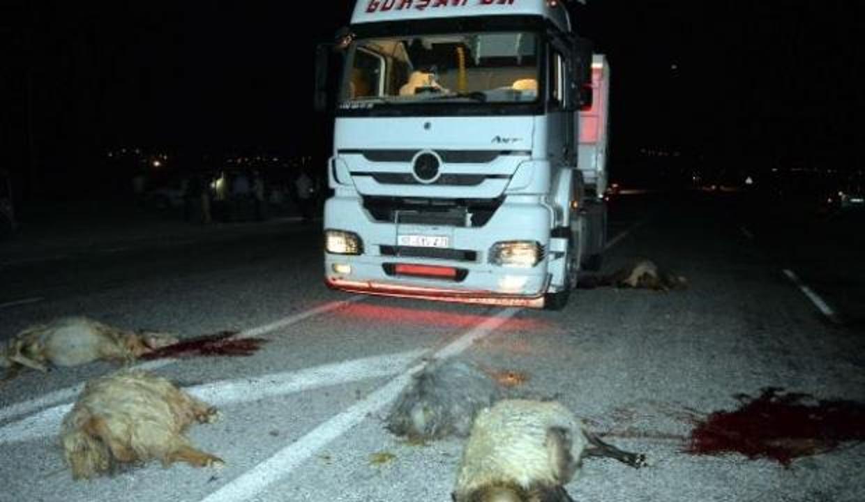 TIR sürüye çarptı; 20 koyun telef oldu