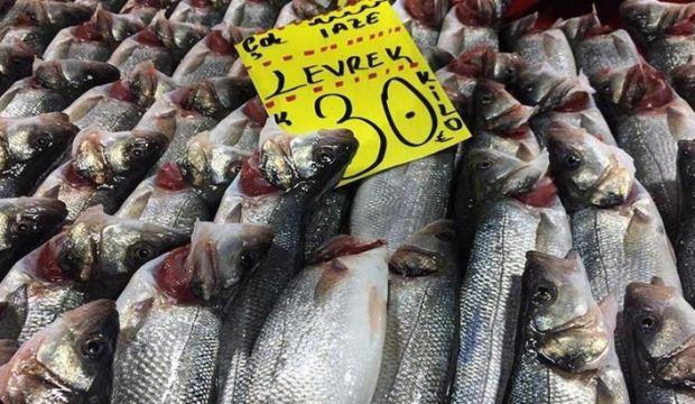 Akılalmaz hile! Balıkların solungaçlarını kırmızıya boyuyorlar