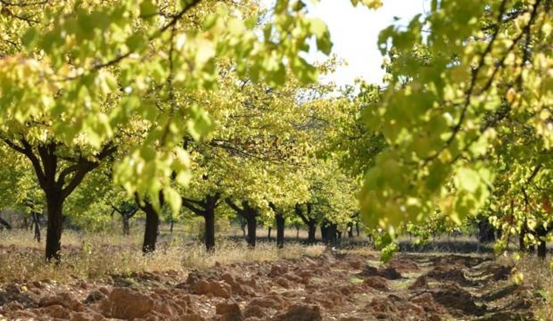 Malatya sonbaharda bir başka güzel: Yeşilyurt doğal güzellikleri