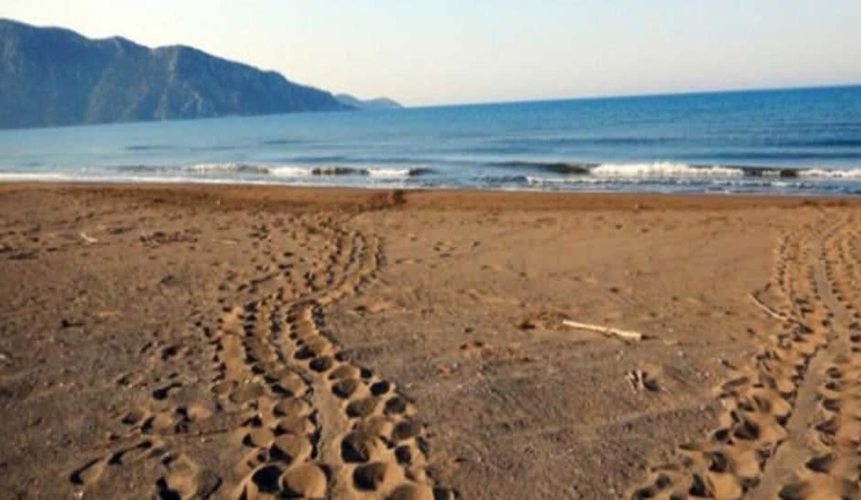 Dünyaca ünlü sahii caretta carettalara kaldı