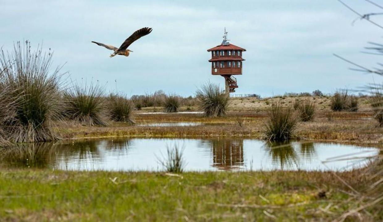 UNESCO Dünya Mirası Daimi Listesi'ne aday kuş cenneti: Kızılırmak