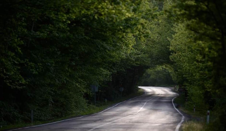Türkiye'de güneş ışınlarının zor geçtiği yemyeşil ağaçlı yol