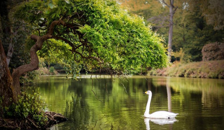 Atatürk Arboretumu İstanbul'da sonbahar mevsiminin adresi