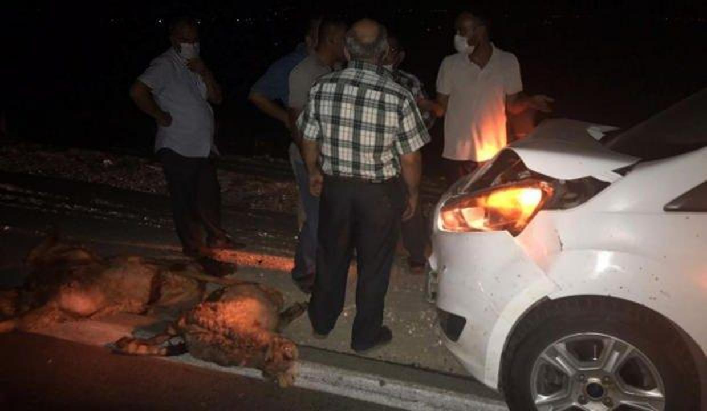 Gaziantep'te sürüye dalan otomobil, 15 koyunu telef etti