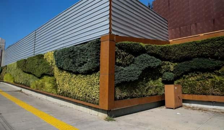 Dikey bahçeler havadaki kirleticileri filtreliyor, sera gazı salınımını azaltıyor