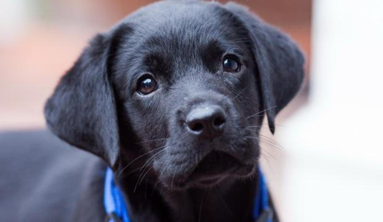 Rüyada siyah köpek görmek neye işaret? Rüyada siyah köpek kovalaması görmek nasıl yorumlanır?