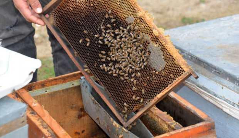 Uzmanı uyardı: 'Bahar aylarında arı ölümleri artacak, stok yapın!'