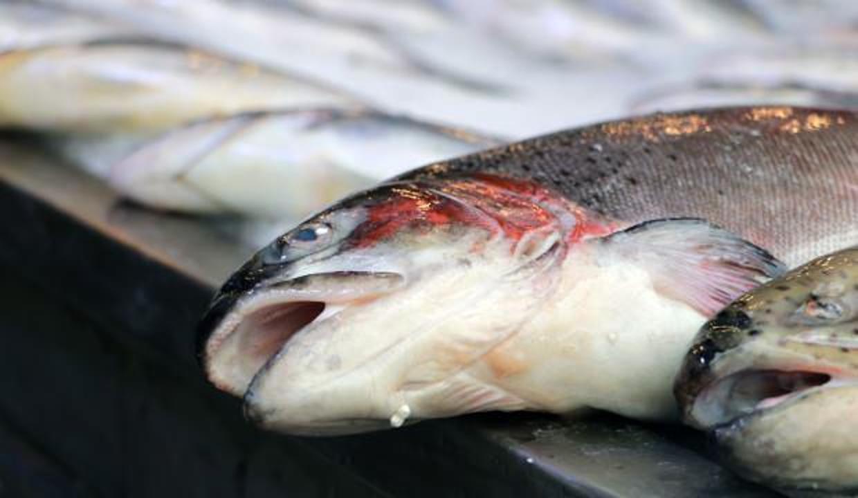 Balıkta boya ve ağırlık hilesi!