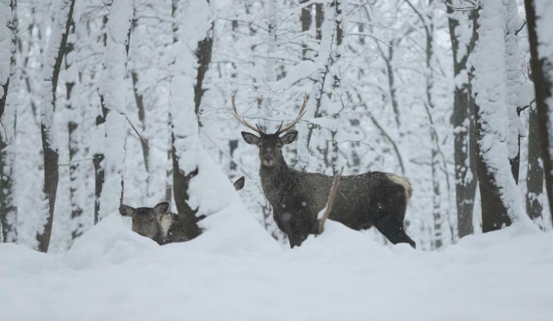 Avrupa'nın en büyük doğal yaşam parkı: Ormanya