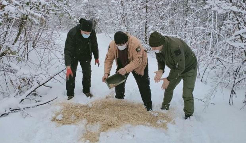 Yaban hayvanları için ormanlık alana yem bıraktılar
