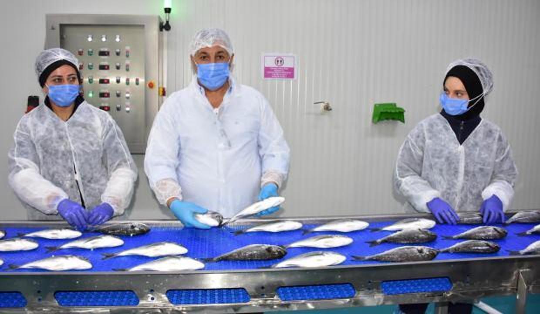 Avrupalılar pandemide Türkiye'den balık yedi!