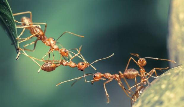 Koronavirüsle hayatımıza giren 'sosyal mesafe' kavramı doğada da uygulanıyor!