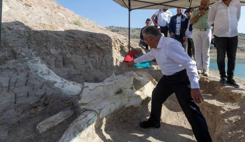 Dünyada tek olan tam kafatası fosili Kayseri'de bulundu!