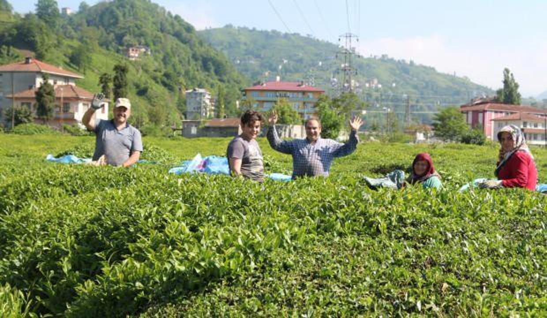 Karadeniz'e 'çay göçü' öncesi koronavirüs uyarısı!
