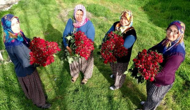Osmaniye'de 20 kadın 'gül yetişmez' denilen yerde gül yetiştirdiler, siparişlere yetişemiyorlar