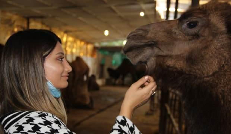 Aydınlı Ayşegül öğretmenin hobisi devecilik görenleri şaşırtıyor
