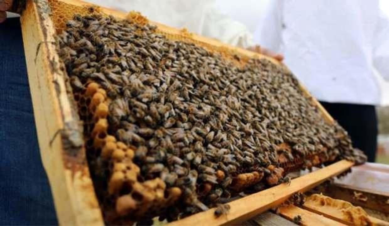 Gaziantep'te bal üretimi 42 kat arttı! Hedef 500 ton
