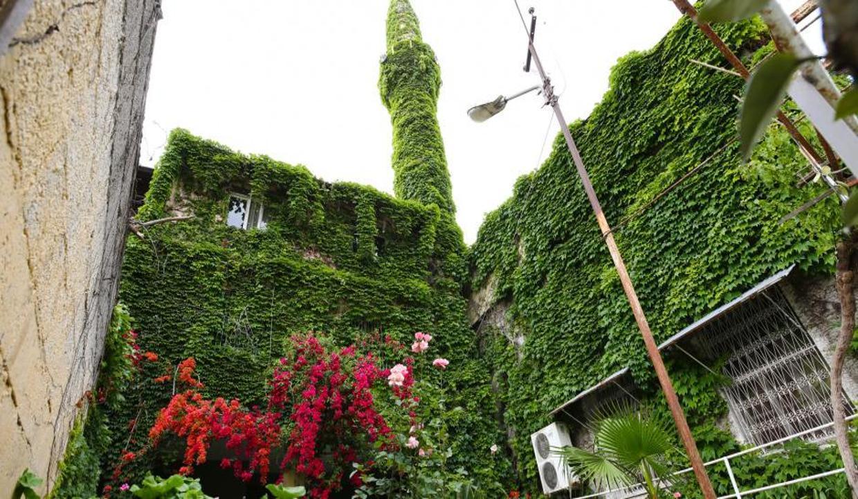 Botanik bahçe değil, 'Yeşil Cami'