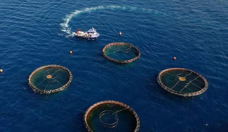Türkiye'nin su ürünleri üretimi açıklandı