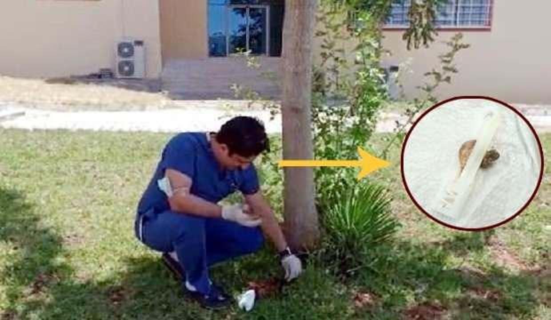 Şanlıurfa'da bir doktor masasında göbek bağı buldu, ağacın dibine gömdü!