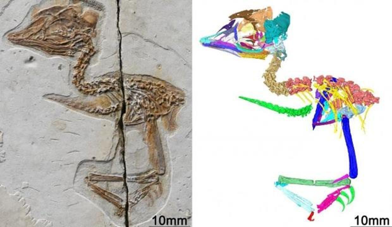 Dinozor kafalı ve kuş bedenine sahip 120 milyon yıllık fosil bulundu