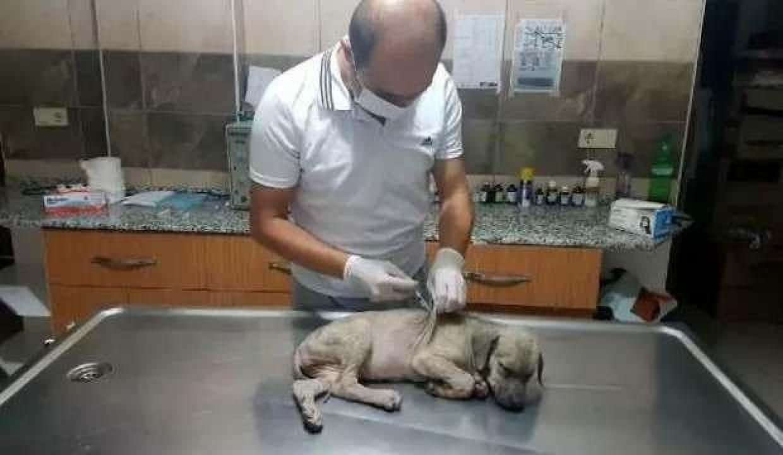 Köpek yavrusuna eziyet eden kişiye 1033 lira para cezası