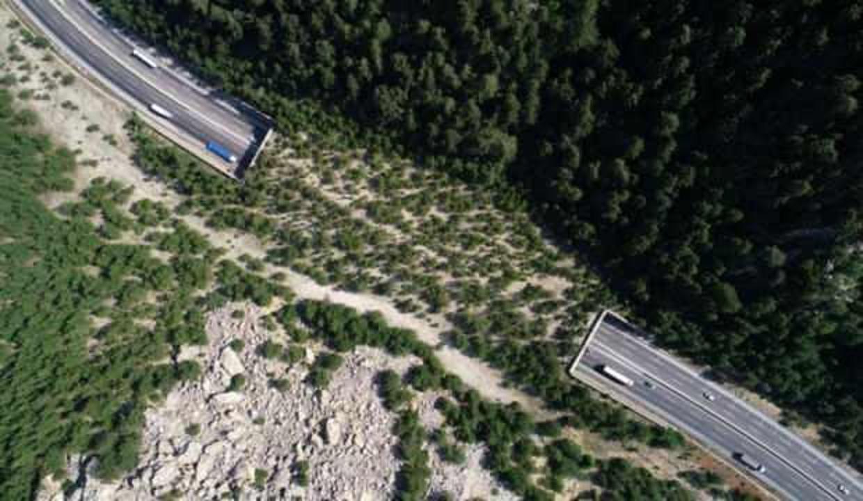 Orman Ekosistem Köprüsü yaban hayvanlarının güvenli geçiş rotası oluyor
