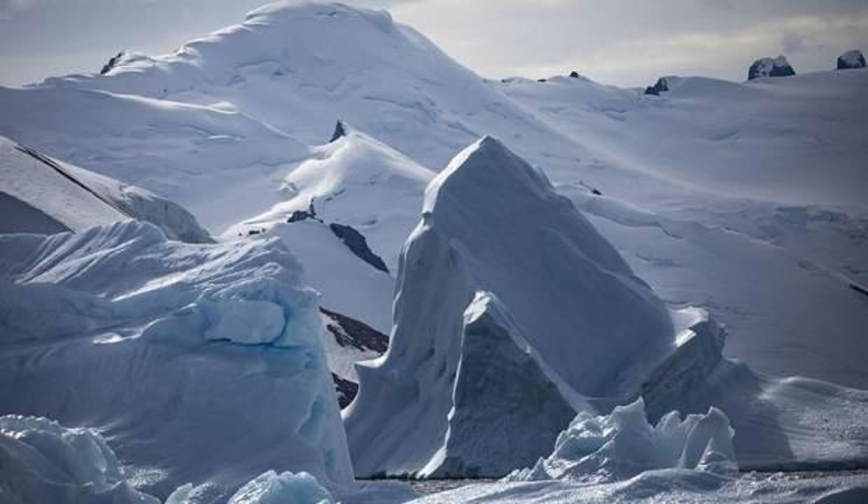 Antarktika'da bilim insanlarını şaşırtan bitki! Nasıl yaşıyor?