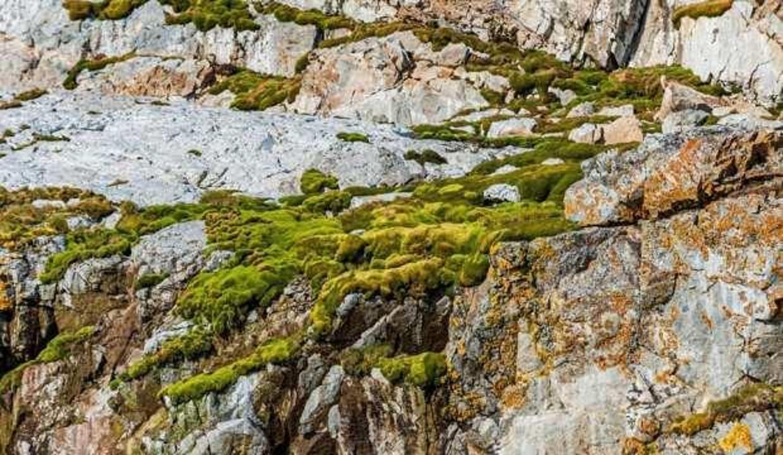 Antarktika'da yeni bir bitki türü keşfedildi