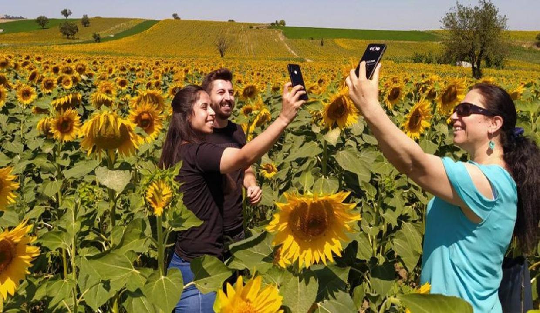 Samsun'a 'sarı' çok yakıştı! Kartpostallık manzaralar ortaya çıktı