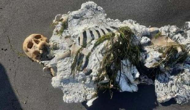 Samsun'da insan iskeleti kıyıya vurdu! Gizemi araştırılıyor