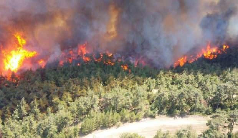 Orman yangınlarından etkilenen bölge halkına hayvancılık desteği