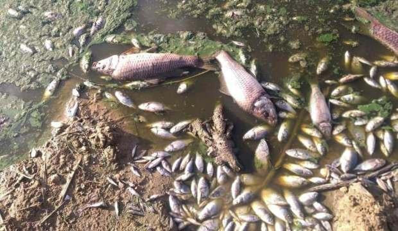 Lüleburgaz'da gölete bırakılan atık binlerce balığı öldürdü