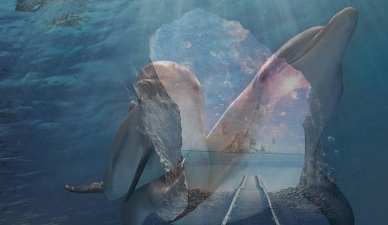 Rüyada yunus balığı görmek ne demek? Rüyada yunus balığı yakalamak neye işarettir?