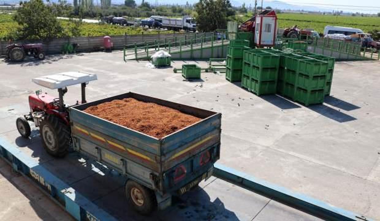 TMO'dan kuru üzüm üreticisine 15 milyon liralık ödeme