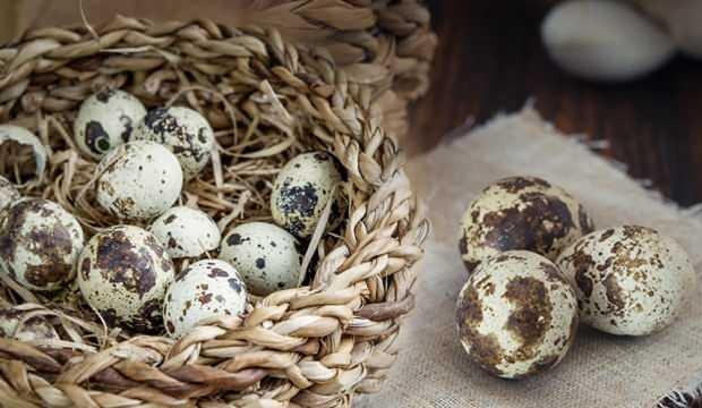 Bıldırcın yumurtasının çocuğa faydası nelerdir? Bıldırcın yumurtası nedir, nasıl pişirilir?
