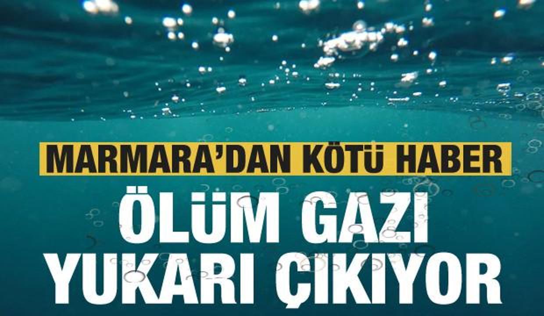 Marmara'dan korkutan haber: Ölüm gazı yukarı çıkıyor