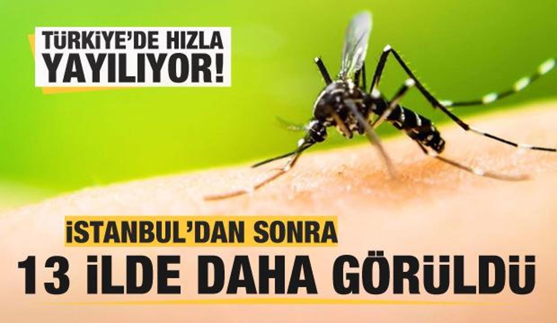 Asya Kaplan Sivrisineği İstanbul'dan sonra 13 ilde daha görüldü